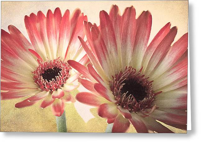 Textured Gerbras Greeting Card by Fiona Messenger