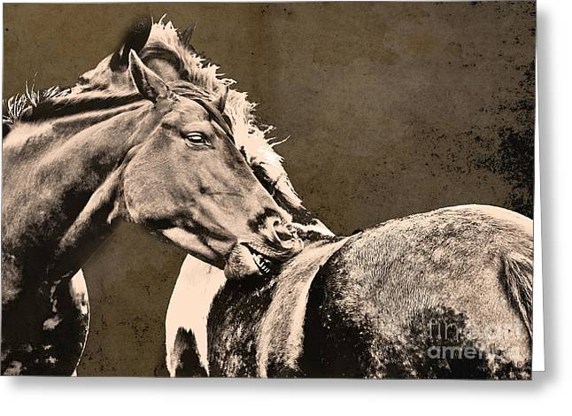 Textured Horses Greeting Card by Darren Burroughs