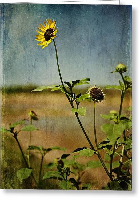 Textured Sunflower Greeting Card