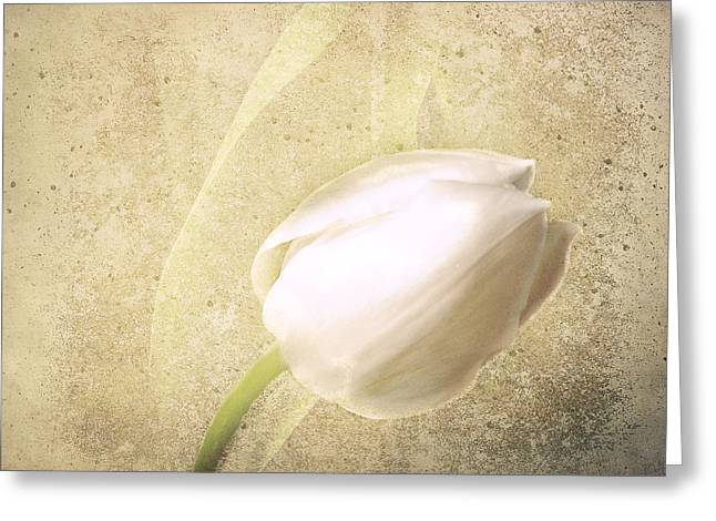 Textured Tulip Greeting Card by Fiona Messenger