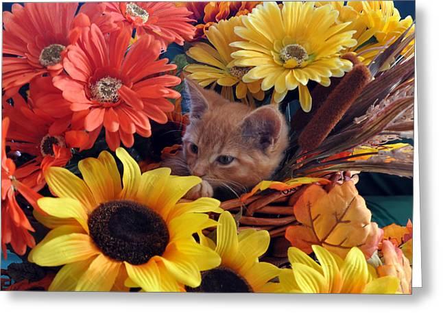 Thanksgiving Kitten Sitting In A Flower Basket Peeking Through Sunflowers - Kitty Cat In Falltime  Greeting Card by Chantal PhotoPix