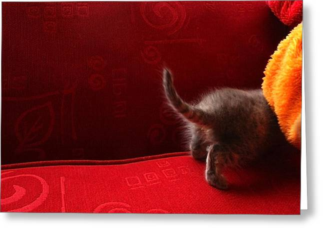 The Absent-minded Kitten Greeting Card by Barbara  White