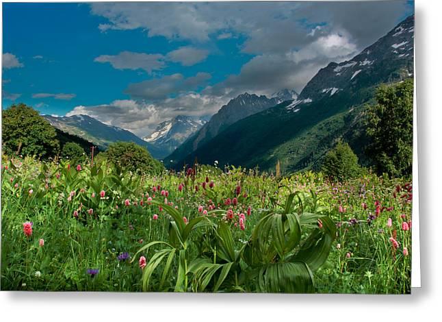 The Alpine Meadows Greeting Card by Olga Vlasenko