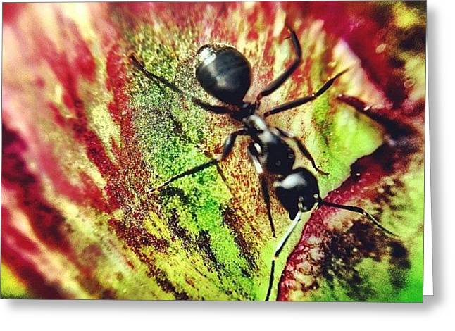 The Ants Have Arrived Greeting Card