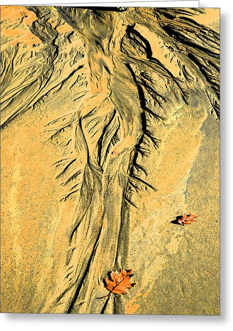 The Art Of Beach Sand Greeting Card by Marcia Lee Jones