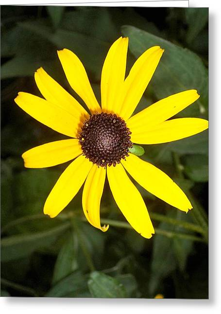 Greeting Card featuring the photograph The Beauty Of A Single Daisy by Shawn Hughes