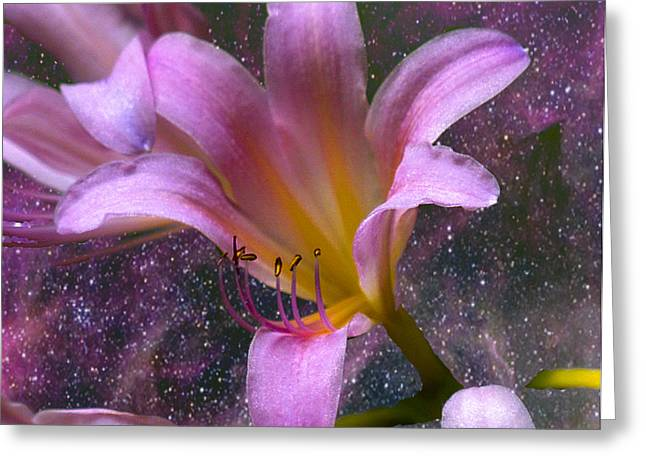 The Beauty Of Pollination Greeting Card by J Larry Walker