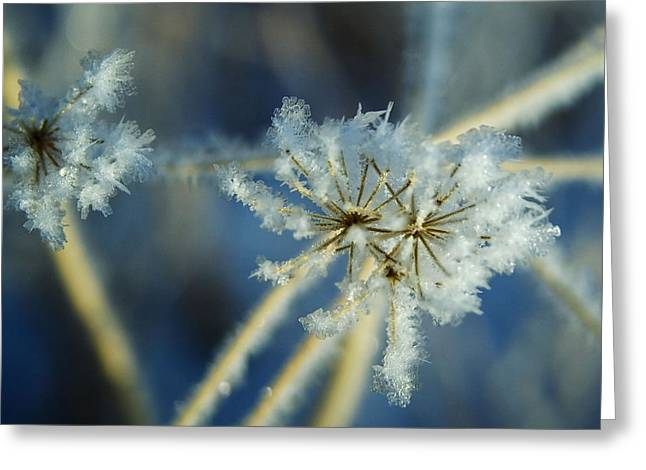 The Beauty Of Winter Greeting Card by Ellen Heaverlo