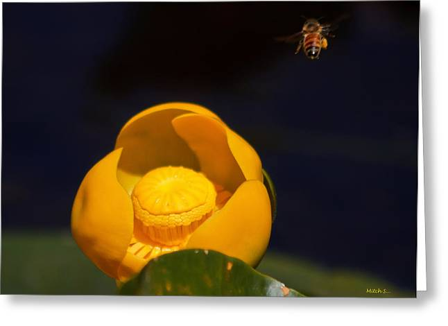 The Bee Greeting Card by Mitch Shindelbower