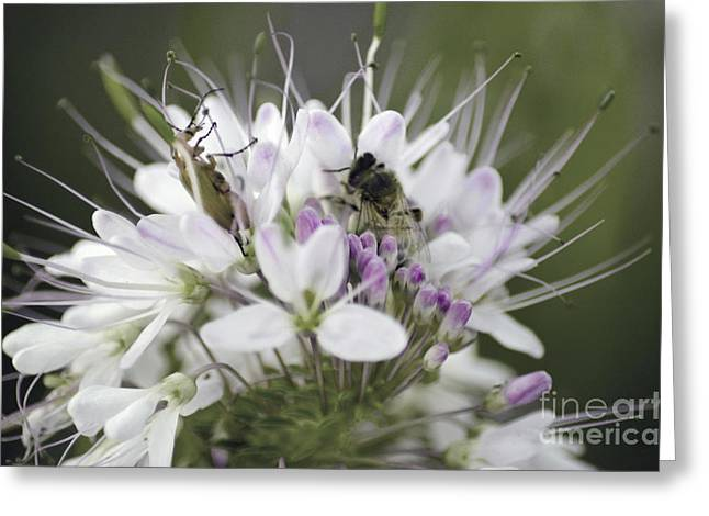 The Beetle And The Bee Greeting Card by Donna Greene