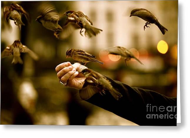 The Birds Greeting Card by Zarija Pavikevik