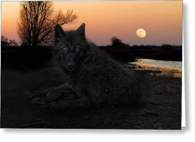 The Black Lone Wolf Greeting Card by Joachim G Pinkawa