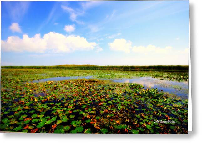 The Bog At Point Pelee Greeting Card