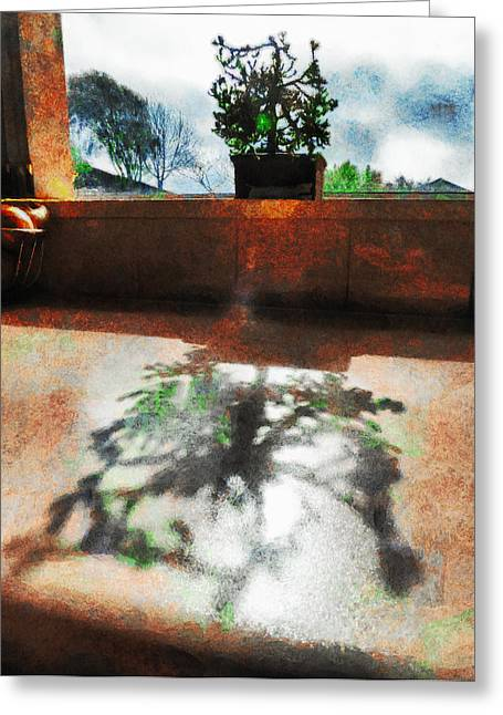 The Bonsai's Shadow Greeting Card by Steve Taylor
