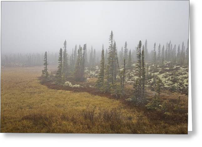 The Boreal Forest On A Foggy Day Greeting Card by Taylor S. Kennedy