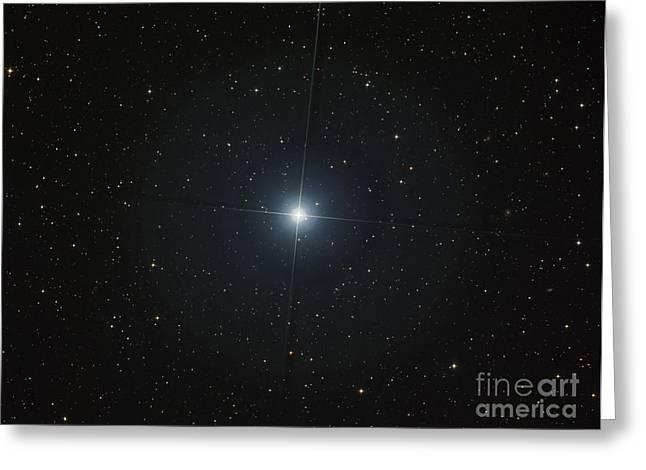 The Bright White Star Castor Greeting Card by Filipe Alves