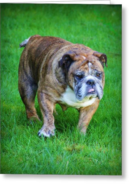 Greeting Card featuring the photograph The Bulldog Shuffle by Jeanette C Landstrom