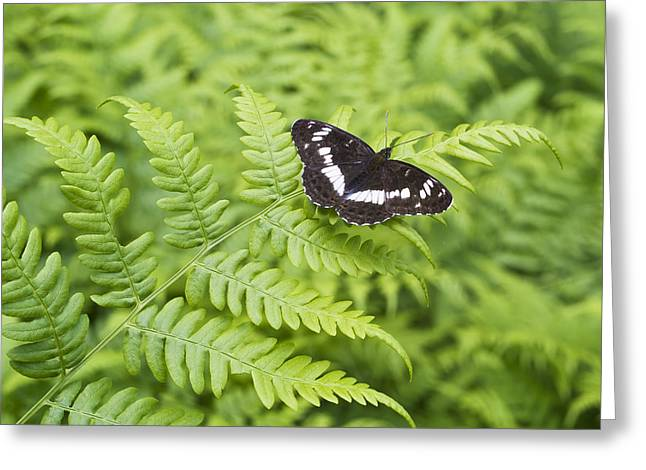 Greeting Card featuring the photograph The Butterfly On Fern Sheet by Aleksandr Volkov