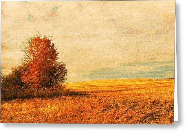 The Careful Breeze  Greeting Card by Jerry Cordeiro