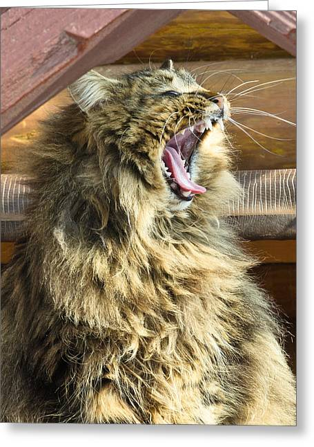 The Cat Who Loves To Sing Greeting Card