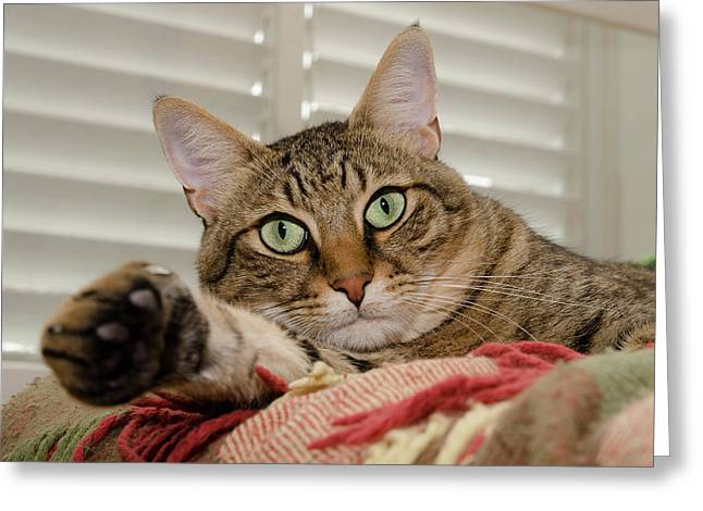 The Cat With Green Eyes Greeting Card