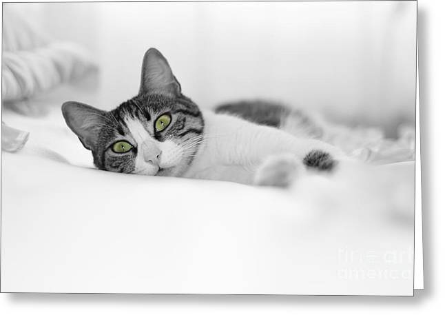 The Cat  Greeting Card by Zafer GUDER