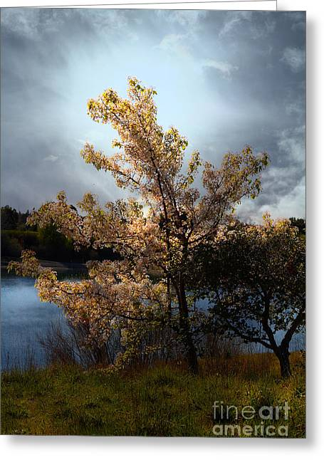 The Cherry Blossom Tree . 7d12703 Greeting Card by Wingsdomain Art and Photography