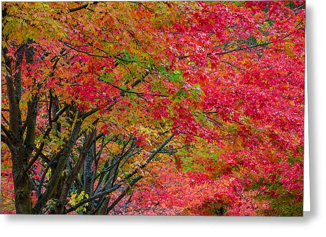 The Color Of Fall Greeting Card by Ken Stanback