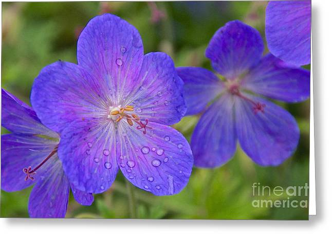 The Color Purple Greeting Card by Sean Griffin