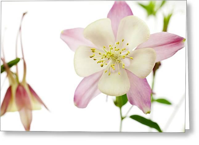 The Columbine Greeting Card by Brad Rickerby