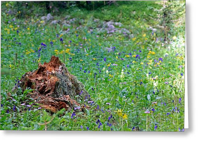 Greeting Card featuring the photograph The Contrast Of Life And Decay by Andrew Serff