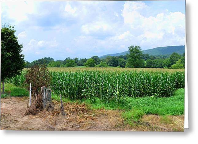 Greeting Card featuring the photograph The Corn Field by Paul Mashburn