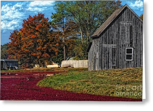 The Cranberry Farm Greeting Card