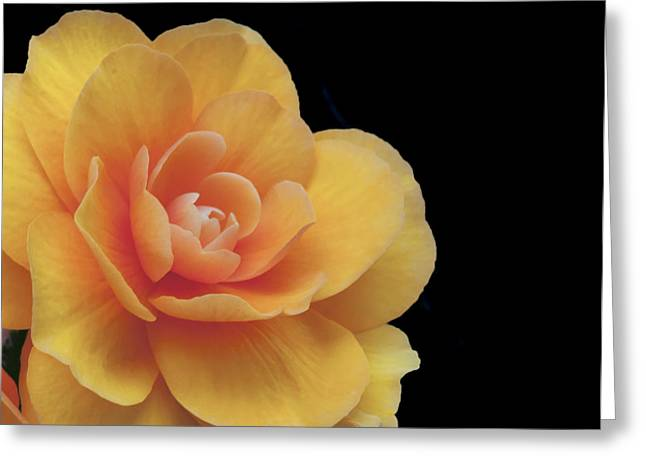 The Dahlia Greeting Card by MaryJane Armstrong