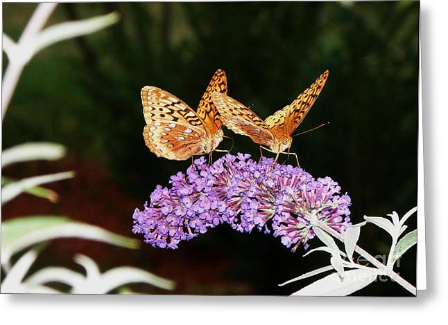 The Dancing Butterflies Greeting Card by Christy Bruna