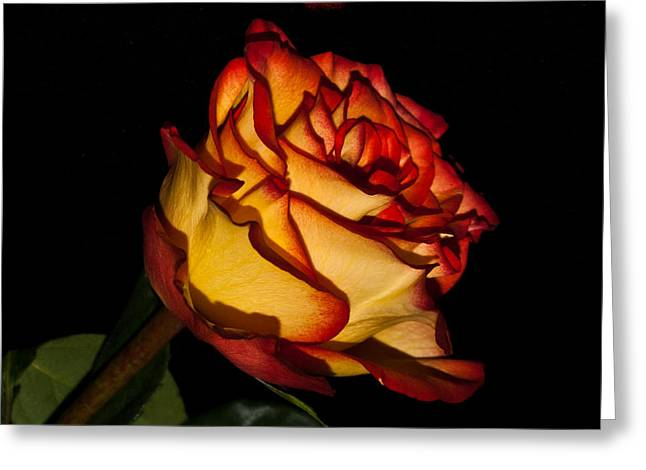 The Deepness Of A Rose 1 Greeting Card by Douglas Barnett