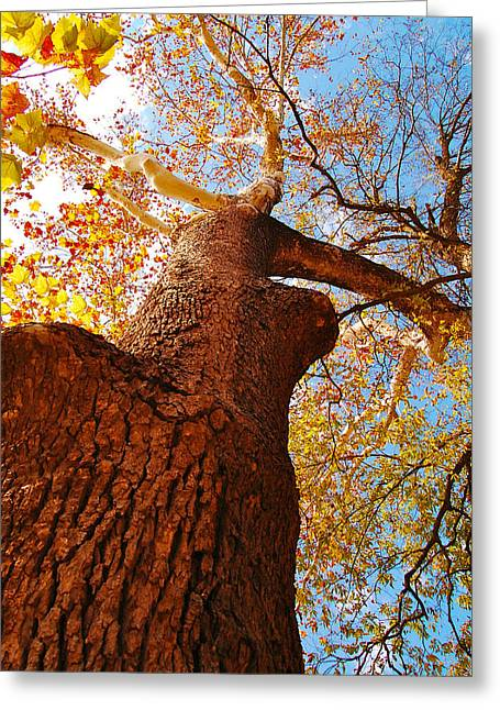 The Deer  Autumn Leaves Tree Greeting Card by Peggy Franz