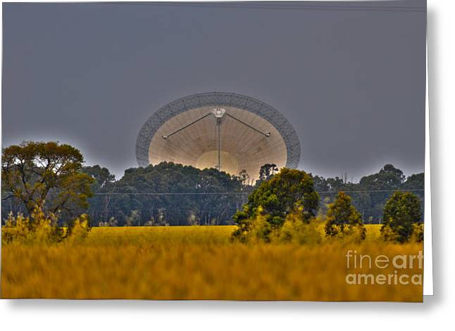 The Dish Greeting Card by Joanne Kocwin
