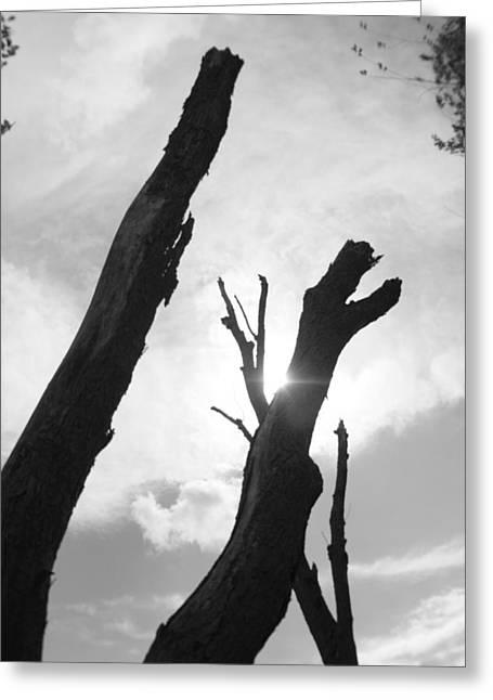 The Dragon Tree Greeting Card by Artist Orange