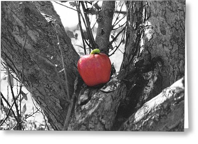 The Early Worm Gets The Apple Greeting Card by Paul Louis Mosley