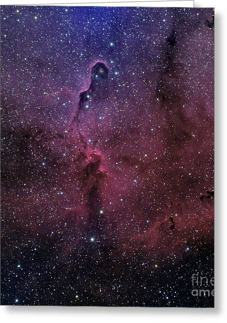 The Elephant Trunk Nebula Greeting Card by Phillip Jones