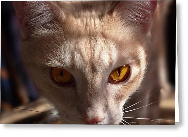 The Eyes Of Raymond Greeting Card by Odille Esmonde-Morgan