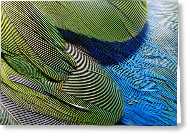 The Feathers Of A Red-winged Parrot Greeting Card by Jason Edwards