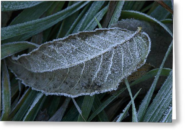 The First Frost On Konza Prairie Greeting Card by Jim Richardson