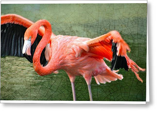 Greeting Card featuring the photograph The Flamingo by Rosemary Aubut