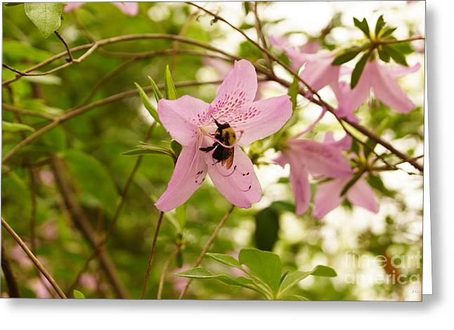The Flower And The Bumble Bee Greeting Card