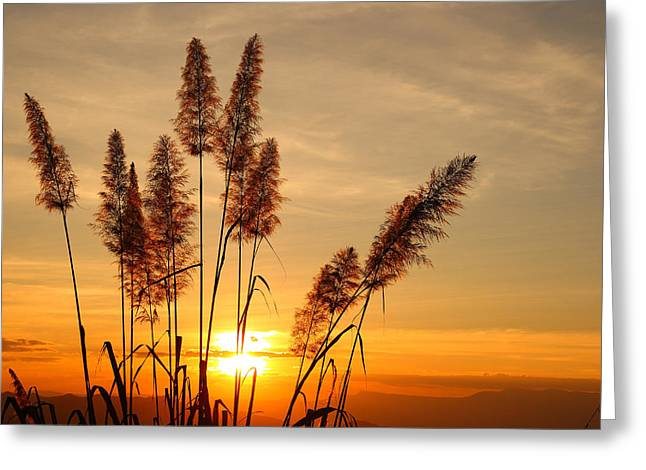 The Flowers Of Grass  On Sunset Greeting Card by Suwit Ritjaroon