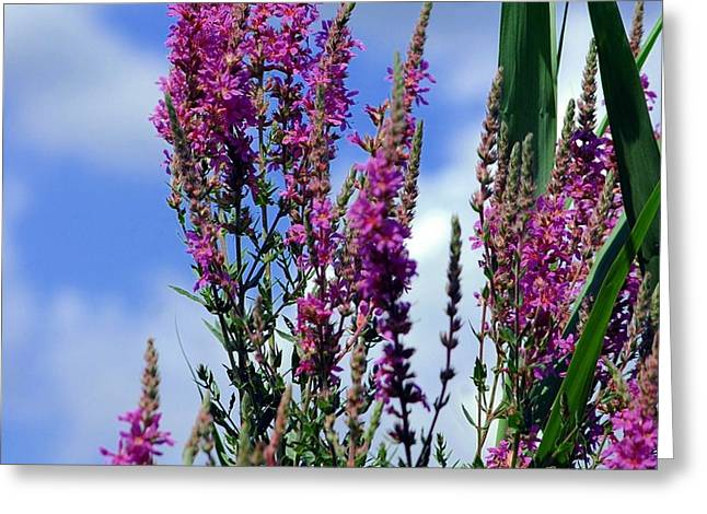 The Flowers Praise Him Greeting Card by Kathleen Struckle