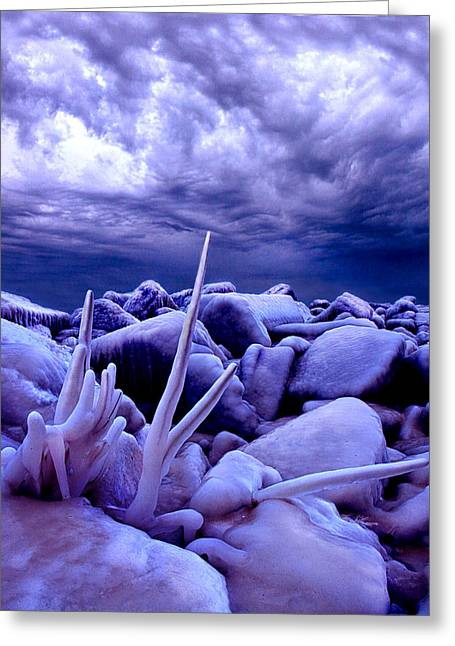The Frost Of Heaven Greeting Card by Phil Koch