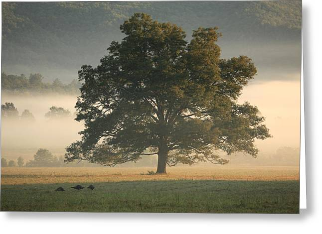 Greeting Card featuring the photograph The Giving Tree by Doug McPherson